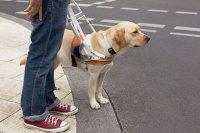 Слабовидящим гражданам положено возмещение расходов на собак-проводников