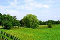Гражданам могут предоставить бесплатные земельные участки по всей территории РФ