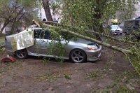 Помощь пострадавшим от урагана москвичам